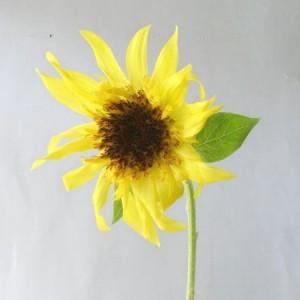 90625 himawari lemon-ekurea