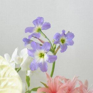 リューココリーネ 薄紫