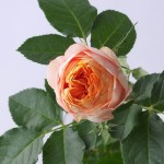 バラ ベビーロマンチカ