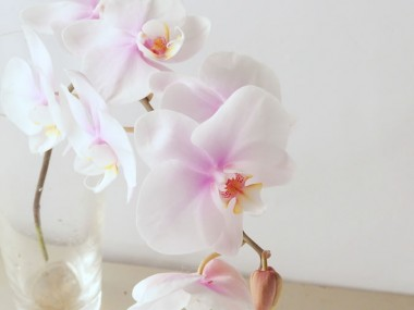 胡蝶蘭 サワディカ