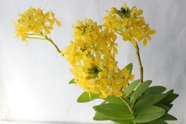 エピデン黄色