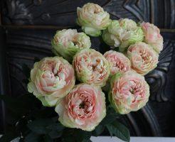バラ 由香