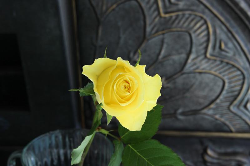 バラ(薔薇) 黄色・イエロー系