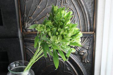 アリストロメリア グリーンチャペル