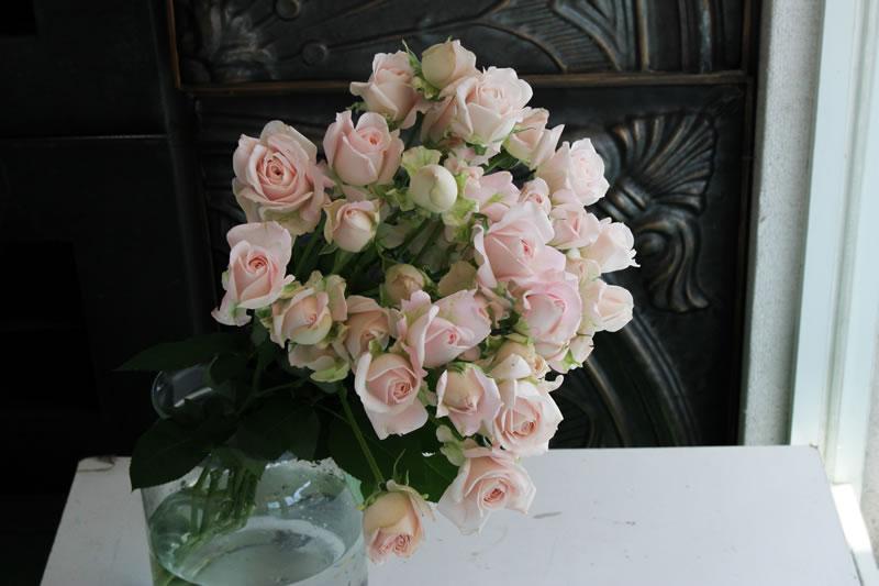 スプレーバラ(切り花)