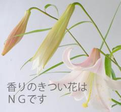 香りの強い花はNG
