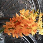 モカラ ブリティッシュオレンジ